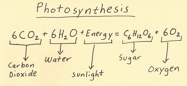 photosysthesis equation  · 1the equation for photosynthesis the raw materials are co 2, h 2 o and light energy the products are glucose (starch) and o 2 2 the process of.